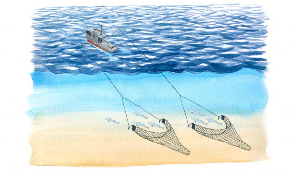 Espaguete com camarão - problemas da pesca de arrasto