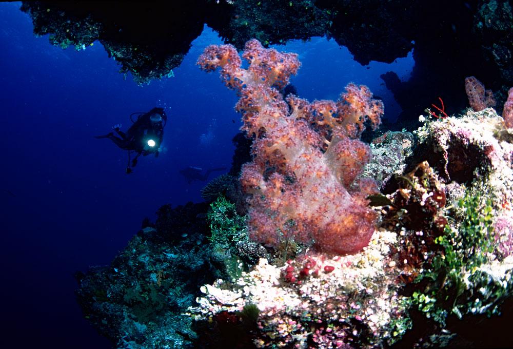 Mergulho com corais moles em Rainbow Reef, Ilhas Fiji, Pacífico