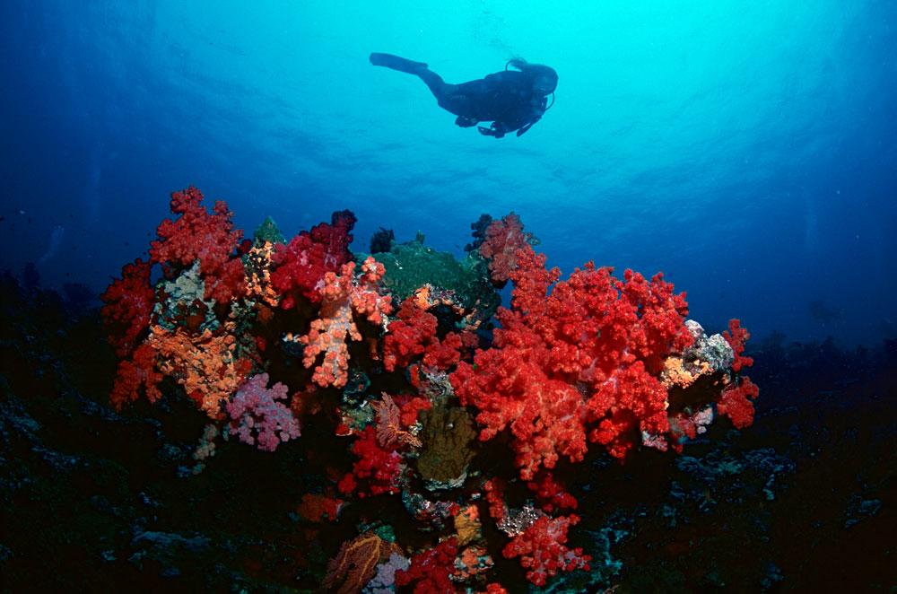 Mergulho em recifes de corais em Rainbow Reef, Ilhas Fiji, Pacífico