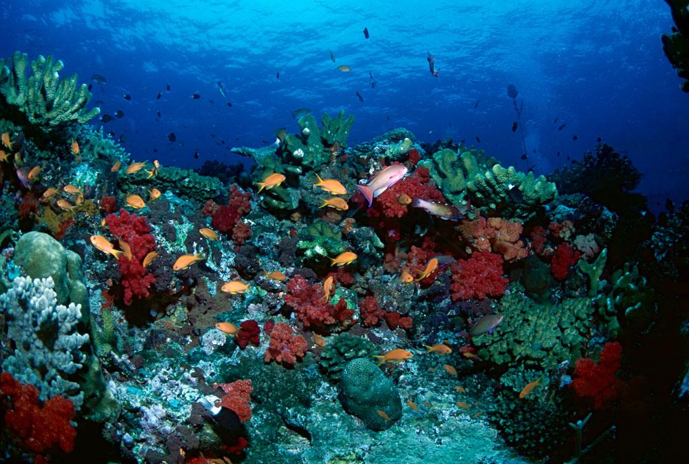 Recife de corais com peixes tropicais em Rainbow Reef, Ilhas Fiji, Pacifico