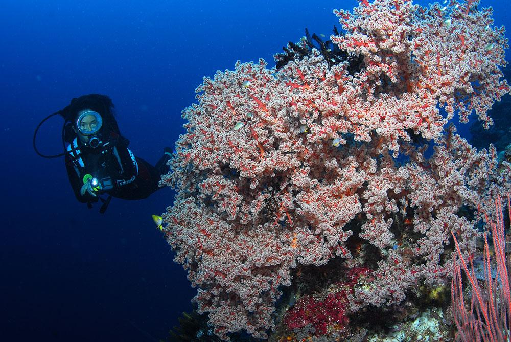 Eu mergulhando com corais moles nas Ilhas Salomão, Pacífico