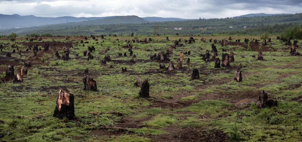 A queda alarmante da Biodiversidade no Planeta