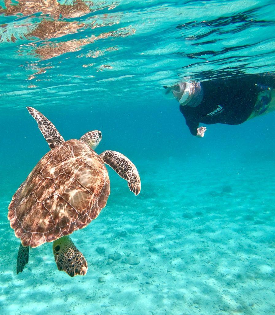 Nadando com tartarugas para manter saúde física e mental